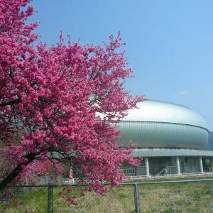 長野:千曲川までサイクリング!