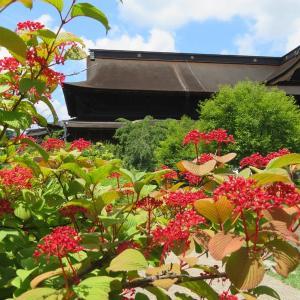 長野:梅雨の合間に善光寺!