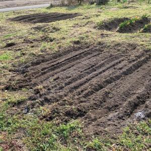 畑に肥料入れる予定が