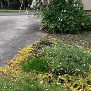 秋の花粉クシャミが出る