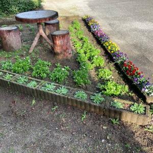 メイン花壇の植え替え完了