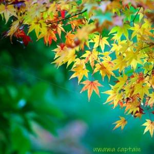 松山城 二之丸史跡庭園の紅葉 昨年11月17日撮影 その2