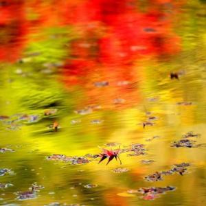 11月21日撮影 松山城二之丸史跡庭園の紅葉