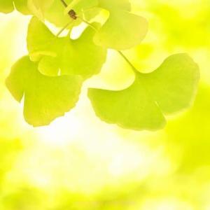 11月21日撮影 松山城二之丸史跡庭園の紅葉 その2
