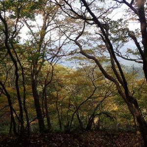 黒尾山から銚子ヶ口へのプチ縦走 道の駅奥永源寺から杠葉尾周遊