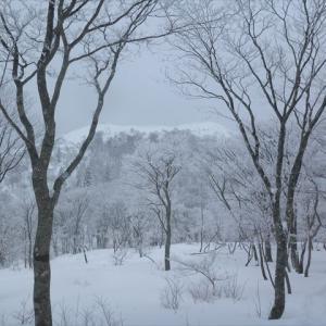 今季初 本格冬山登山? 武奈ヶ岳