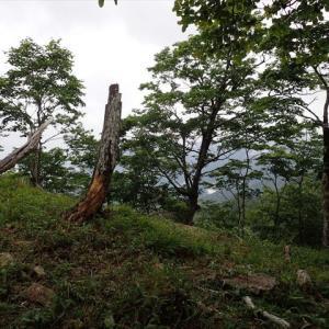 本格的登山の始動前に・・・八経ヶ岳3 出合から弥山小屋