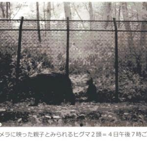 2019.07.05 あらら滝野公園が大変 親子のヒグマちゃん登場 早く山へおかえり~~!