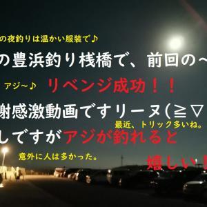 【サビキ】リベンジ成功!夜の豊浜釣り桟橋で「アジ」を!【釣り】リーヌ(≧▽≦)