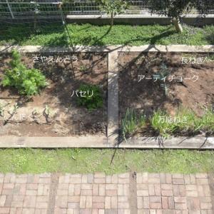 家庭菜園ツアー