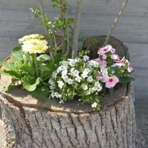 庭 植物の様子&増えすぎた植物の整理