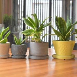 観葉植物 株分け&ヨーロッパからやってきたプランターカバー
