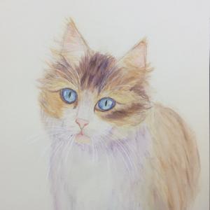 猫を水彩色鉛筆で描くっていう講座に行ってしました。