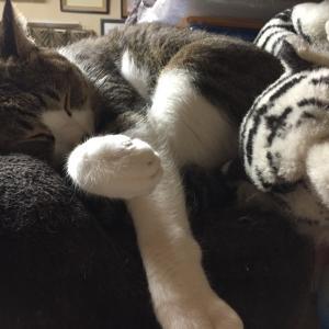 大きな猫!?さんとツーショット