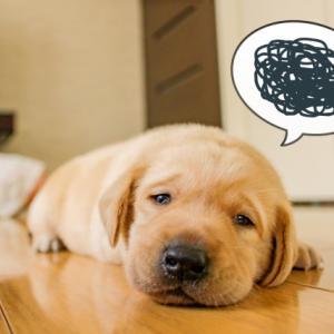 病院でいくつかの指摘をされた犬の食事にアドバイスをお願いします
