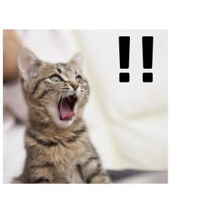 犬猫の自然食を知らないなんて、あなたの犬猫は損をしている。犬猫自然食コースオンライン開講中です。