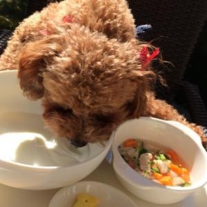これを避けていれば犬猫のごはんは7割うまくいく「犬猫のNG食材」