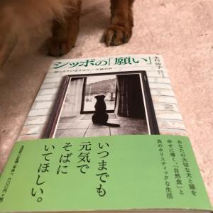 [コピー]【祝・新刊】シッポの「願い」聞こえていますか?