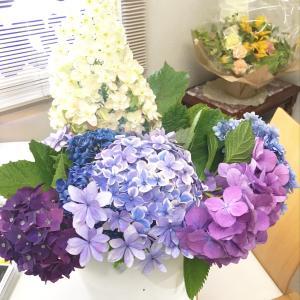 朝、出勤したらドアの前にこちらの【紫陽花】達が 入れ物に水に入ったままの状...