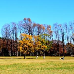 公園の秋模様
