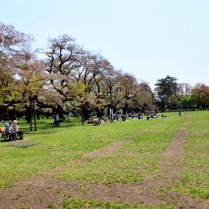 公園散策で筋トレ