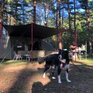 今シーズン3回目、広大な吹上高原キャンプ場で密な犬連れファミキャン決行!