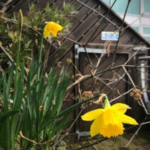 春よこーーーい!