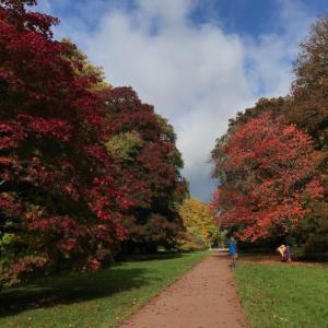 秋の森林でデトックス&パワーチャージ