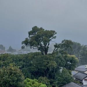 帰京してから降り続く雨