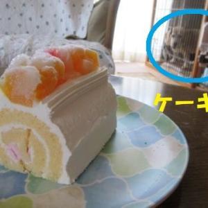 ケーキ落ちたです!