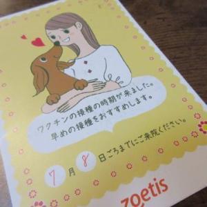 別犬2頭とマーチ♡
