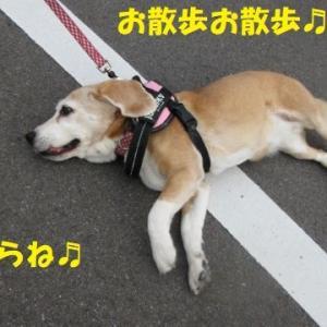お散歩お散歩??