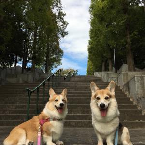久しぶり公園散歩。