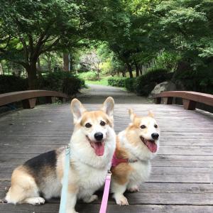 公園散歩。