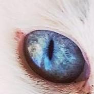 ユキの瞳の宇宙