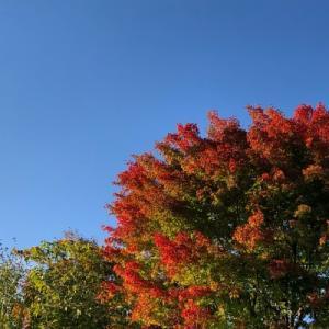 収穫の秋、ヤマガラ