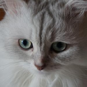 『アベノマスクより早くベツノマスク!』&今話題の『ご主人様が大好きな猫たち』