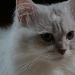 猫様のお髭の色&平和なGENTLENYAN🐈💓