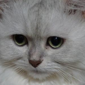 猫毛の糸紡ぎ