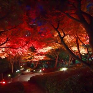八芳園の紅葉