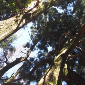 伊豆山稜線歩道―二本杉峠~三蓋山