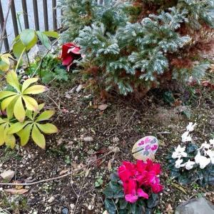 庭の可愛い花