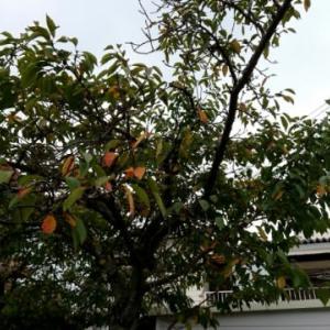 秋が来たね😃