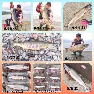 2018年8月からの鮭とロックまとめ☆1月のロック釣行☆