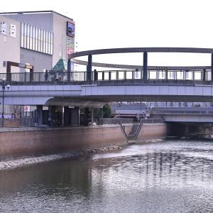 久し振りに登場! 庄下川のユリカモメ!!!