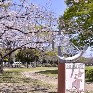 尼崎、小田南公園の桜。