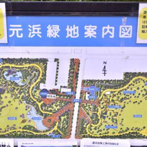 元浜緑地公園の紫陽花が見頃です!