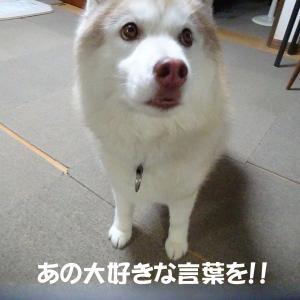 食べる?←大好きワードw