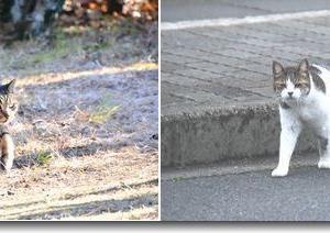 散歩で会った猫ちゃん達