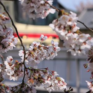 2017年春の鉄道撮影with桜